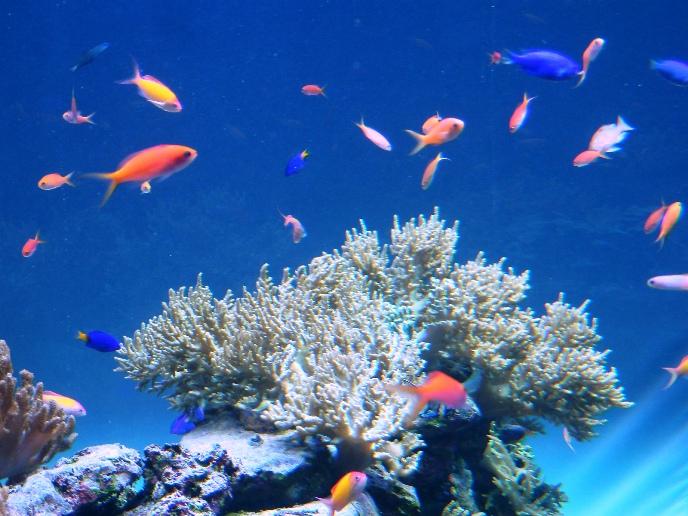 サンシャイン水族館水槽02.jpg