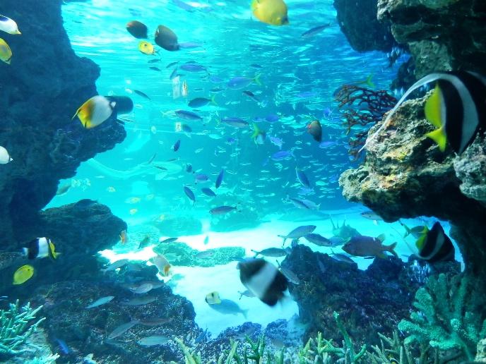 サンシャイン水族館水槽04.jpg