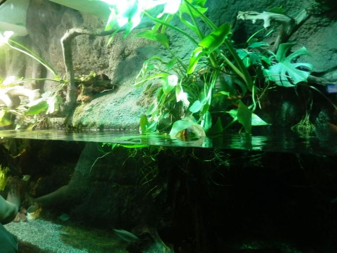 サンシャイン水族館水槽09.jpg