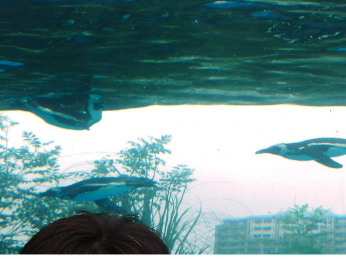 サンシャイン水族館野外05.jpg
