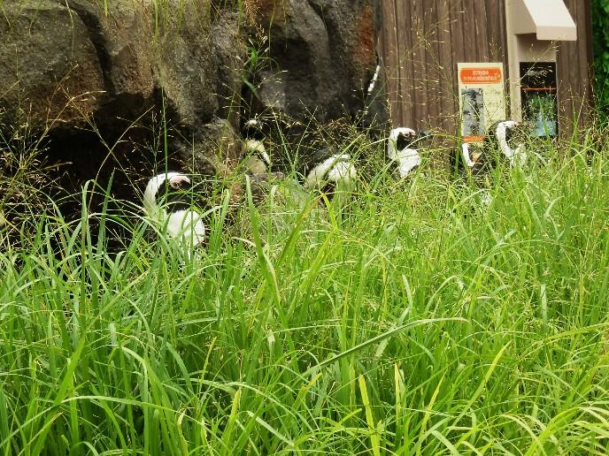 サンシャイン水族館野外06.jpg