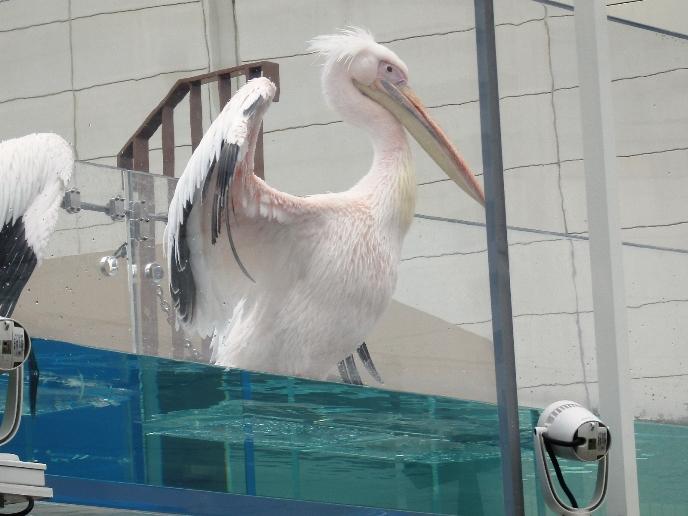 サンシャイン水族館野外09.jpg