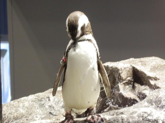 ペンギン5.jpg