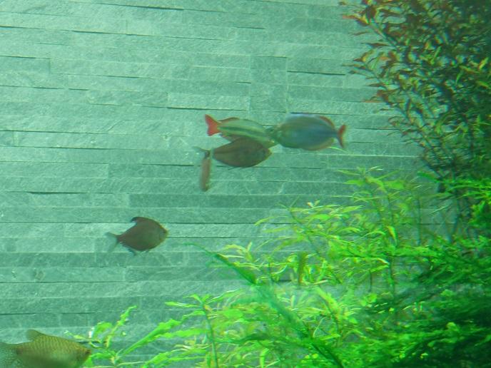 熱帯魚2.jpg