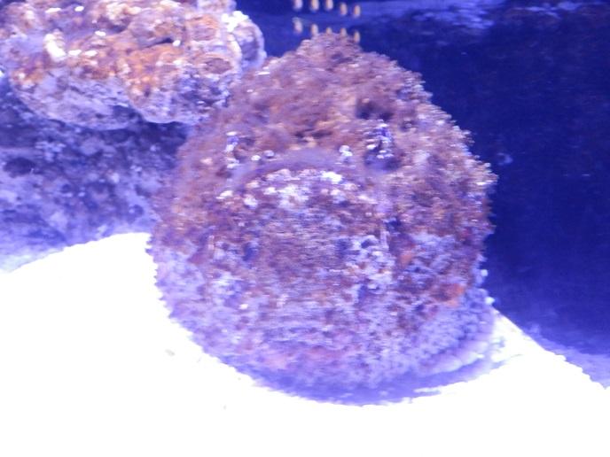 特徴ある魚1.jpg
